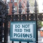 How to make pigeons go away