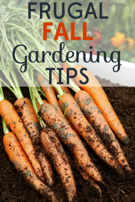 The beginning of fall means it's time to prepare the garden for the cooler months ahead.. Check out our frugal fall gardening tips.