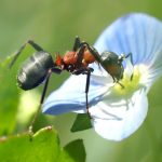 Cheap and Natural Methods to Control Pests in Your Garden