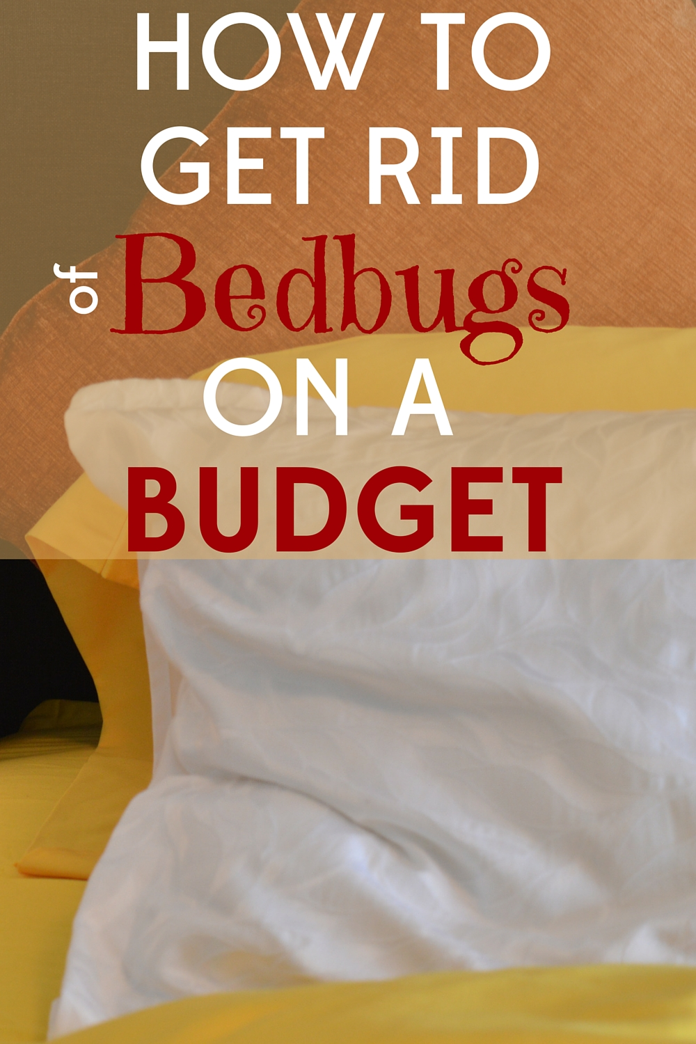 Bed Bugs Cost Heat Treatment For Bed Bugs Cost Endearing The Eliminex Pest Control Pest Blog