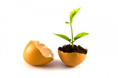 Use an eggshell as a biodegradable plant starter pot.