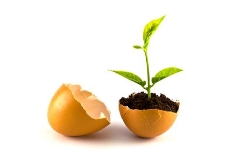 8 Uses For Egg Shells