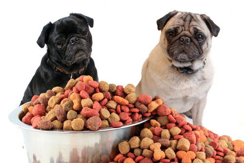 Tuesday Freebies – Free 15 Pound Bag of Dog Food