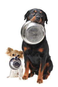 Score a free sample of Beneful dog food today! Via Shutterstock.