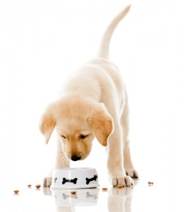 Score free dog food today! Via Shutterstock.