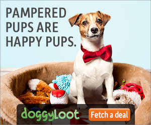 Up to 75% Off Dog Toys, Treats, Accessories and More!