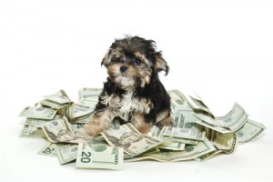 Saving Money on Your Dogs via shutterstock