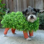 10 Hilarious Dog Halloween Costumes You Can Make on a Budget