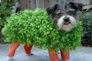 Ch-ch-ch-chi! via Cutest Dog Ever