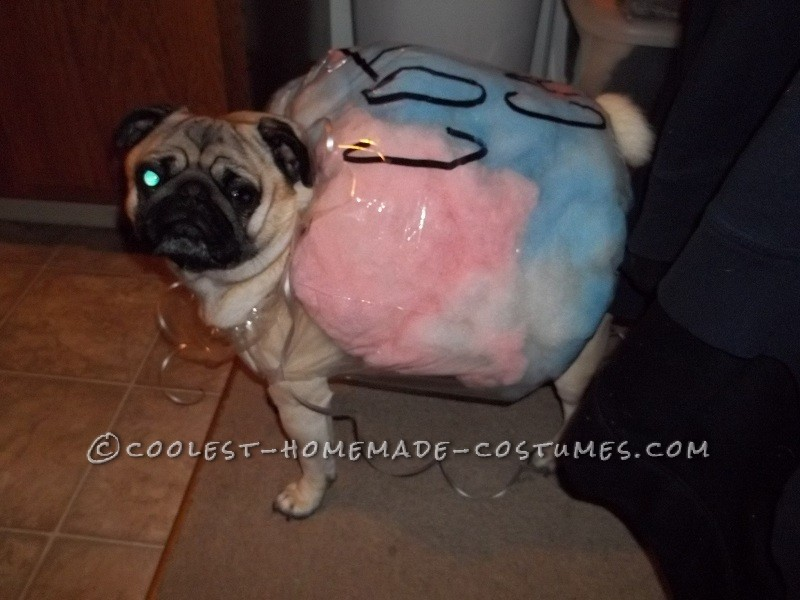 Cotton Candy via Coolest Homemade Costumes & 10 Hilarious Dog Costumes You Can Make On a Budget