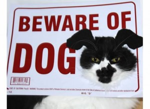 Beware of Dog Costume
