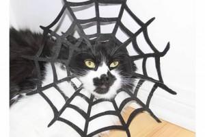 Bebe Splotch Cat caught in a Spiderweb Costume