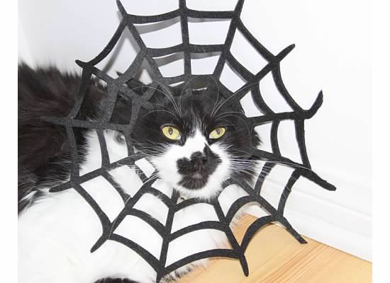 Bebe Splotch Cat caught in a Spiderweb Costume  sc 1 st  Bargain Babe & 11 Quick and Easy DIY Halloween Costumes for Your Cat