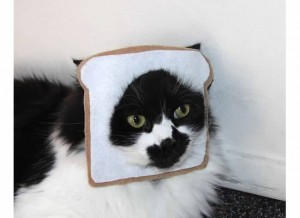 Breaded Cat Costume