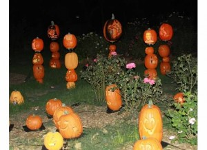 Pumpkins illuminated
