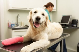 Is pet insurance worth the cost? via shutterstock