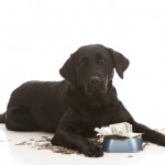 11 Tricks to Save Money on Dog Food