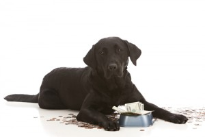 Dog food is expensive! via shutterstock