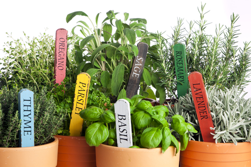 Save Money with Herbs: How to Start an Herb Garden!