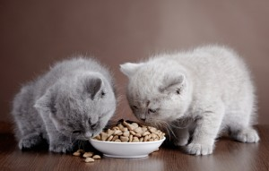 Snag a FREE cat food sample today! Via Shutterstock.