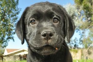 The million dollar puppy.