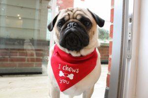 Valentine's Day bandana