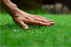 Spring is Coming: Here are 5 Ways to Save Money on Lawn Care