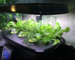 Easy Gardening with AeroGarden: No Need for a Green Thumb