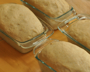 The Best Whole Wheat Bread Recipe Ever