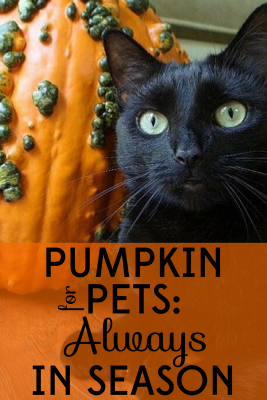 pumpkin-for-pets