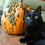 Pumpkin for Pets: Always in Season