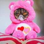 6 Halloween Pet Costumes that Will Make You LOL