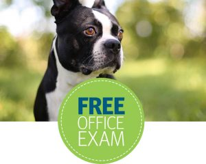 Saturday Freebies – Free Banfield Pet Hospital Office Visit & Consultation