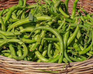 Thursday Freebies-Free Tasty Bite Organic Green Bean Seeds