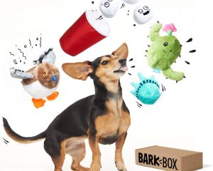 BarkBox Best of Box Plush Toy Bundle for Small, Medium, and Large Dogs, 2-in-1 Squeak and Chew Toys for Long-Lasting Playtime – Great Gift! $24.99