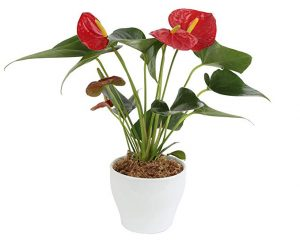 Save 25% on Costa Farms Spring Plants