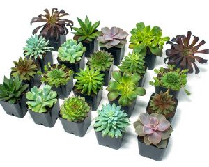 Save 25% on Succulents & Bonsai Trees for Mother's Day