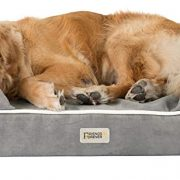 Save up to 50% on Friends Forever Dog & Cat Products