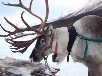 reindeer-2023720_1920