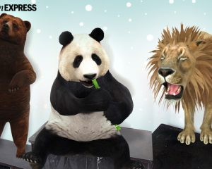 Monday Freebies-Free Google 3D Animals Virtual Safari in Your Home